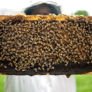 Highland Honey - Honey & Bee Pollen Products