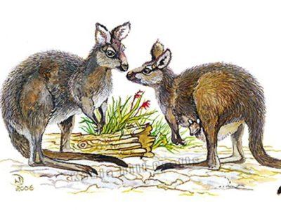 Koala Hill Crafts - Australian themed Cards, Prints & Stationery