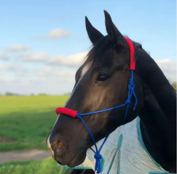InSync Halters & Accessories - Handmade Dog Leads & Horse Rope Halters & accessories