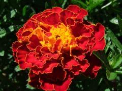 Life-Force Seeds - Seeds Vegetable, Herb & Flower seeds