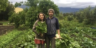 Peace Farm Produce - Fresh Vegetables